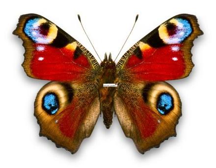 89303524_butterfly2081.jpg