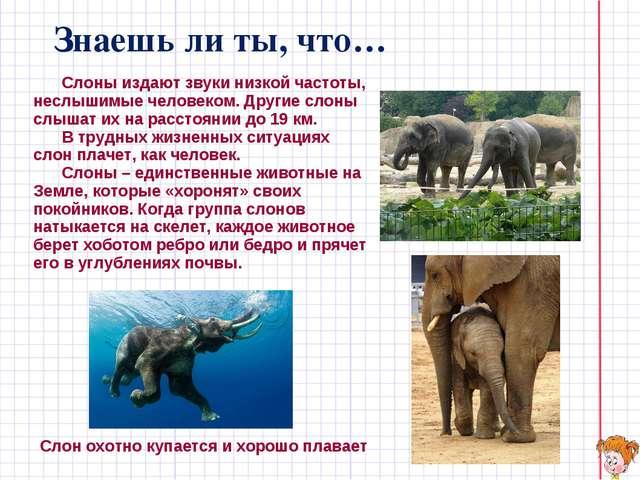 Знаешь ли ты, что… Слоны издают звуки низкой частоты, неслышимые человеком....