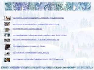 http://www.1in.kz/s/photos/2009/10/13/131009-belka-sneg_1600x1200.jpg http:/