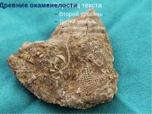 Древние окаменелости