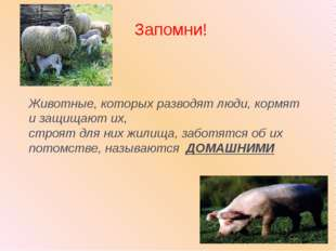 Животные, которых разводят люди, кормят и защищают их, строят для них жилища