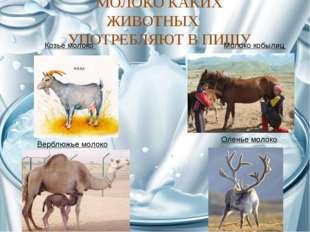 МОЛОКО КАКИХ ЖИВОТНЫХ УПОТРЕБЛЯЮТ В ПИЩУ Козье молоко Молоко кобылиц Верблюжь