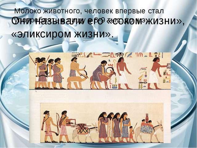 Молоко животного, человек впервые стал употреблять в пищу в 8-9 тыс. до н.э....
