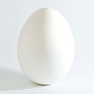 White_chicken_egg_square