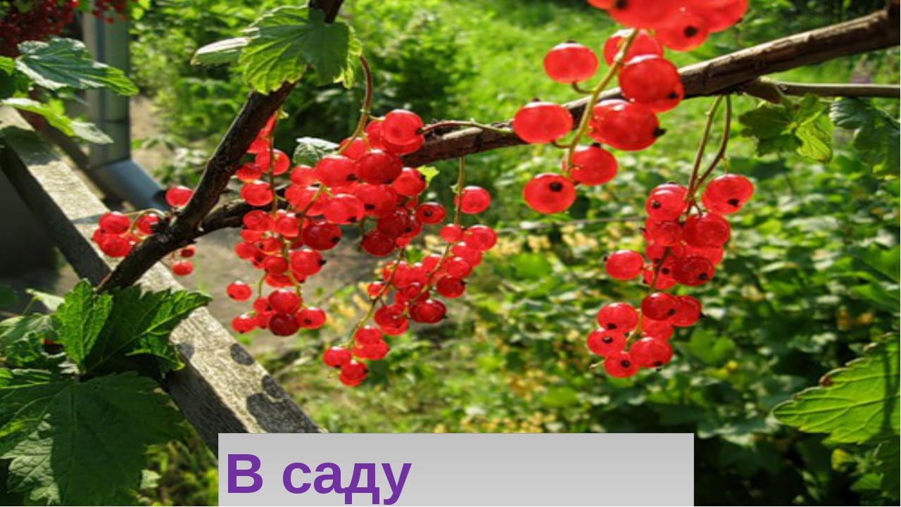 В саду смородина,