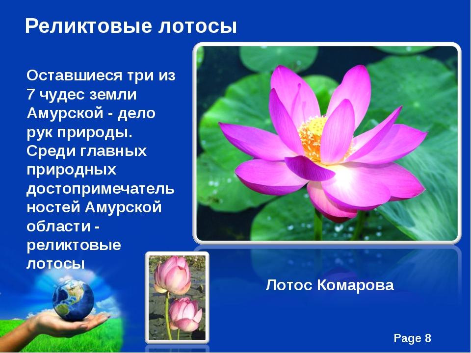Реликтовые лотосы Оставшиеся три из 7 чудес земли Амурской - дело рук природы...
