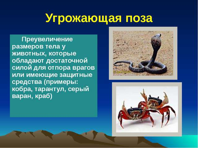 Угрожающая поза Преувеличение размеров тела у животных, которые обладают дос...