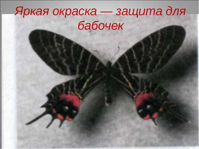 Яркая окраска — защита для бабочек