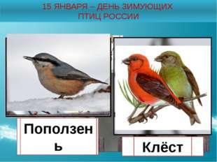 15 ЯНВАРЯ – ДЕНЬ ЗИМУЮЩИХ ПТИЦ РОССИИ Снегирь Свиристель Щегол Поползень Клёст
