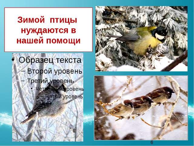 Зимой птицы нуждаются в нашей помощи