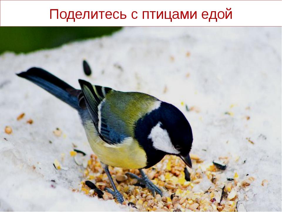 Поделитесь с птицами едой