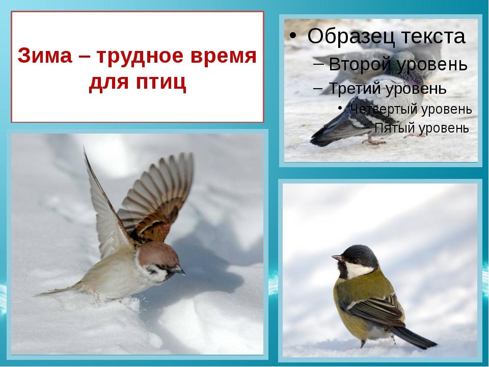 Зима – трудное время для птиц