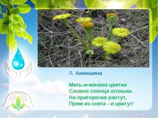 Л. Акиншина Мать-и-мачехи цветки Словно солнца огоньки. На пригорочке растут