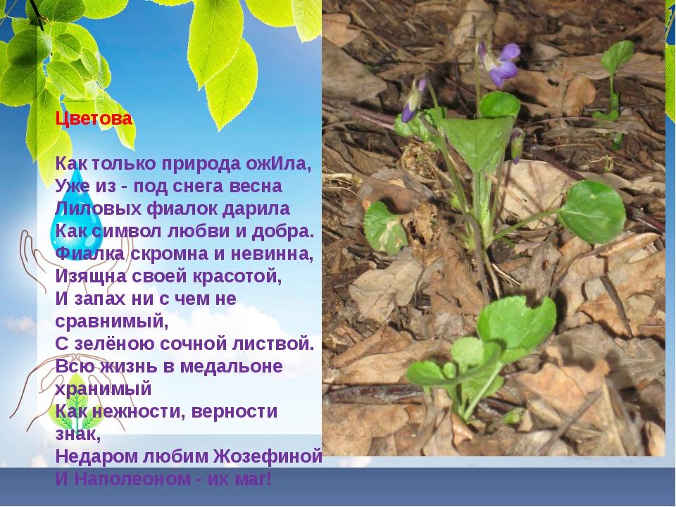 Цветова Как только природа ожИла, Уже из - под снега весна Лиловых фиалок...