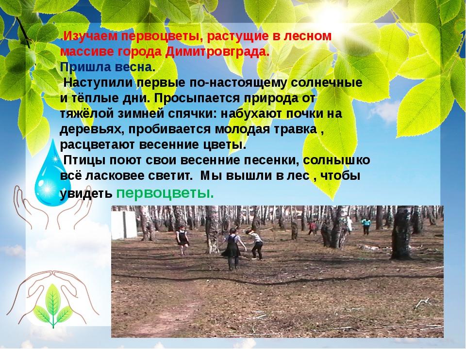 .Изучаем первоцветы, растущие в лесном массиве города Димитровграда. Пришла...