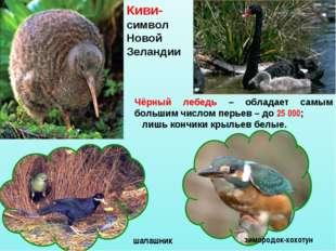 Чёрный лебедь – обладает самым большим числом перьев – до 25 000; лишь кончик
