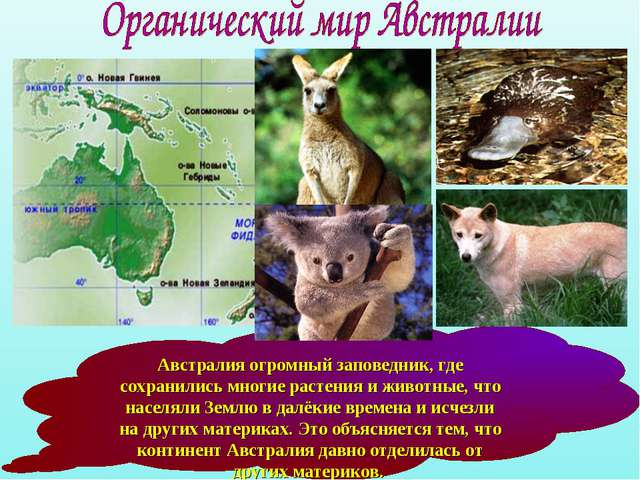 Австралия огромный заповедник, где сохранились многие растения и животные, чт...