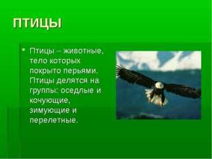 ПТИЦЫ Птицы – животные, тело которых покрыто перьями. Птицы делятся на группы