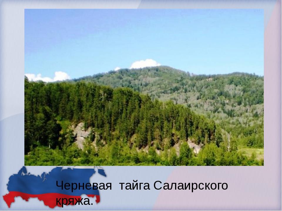 Черневая тайга Салаирского кряжа.