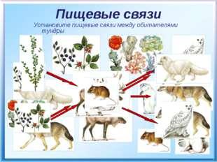 Пищевые связи Установите пищевые связи между обитателями тундры