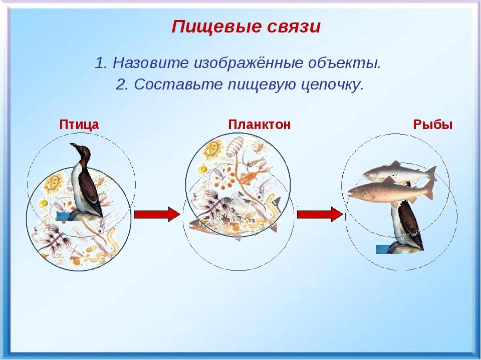 Птица Планктон Рыбы Пищевые связи 1. Назовите изображённые объекты. 2. Соста...