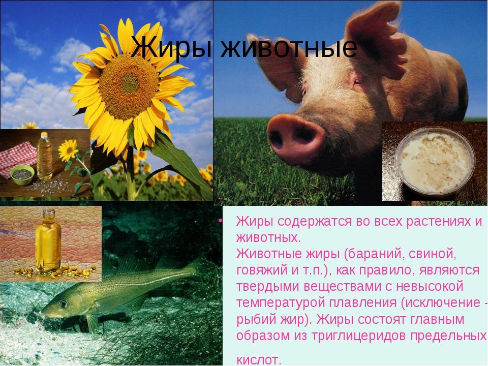 Жиры животные Жиры содержатся во всех растениях и животных. Животные жиры (ба...