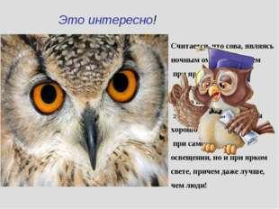 Это интересно! Считается, что сова, являясь ночным охотником, днем при ярком