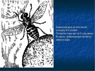 Комнатная муха за лето может отложить 810 особей. Потомство пары мух за 2 год