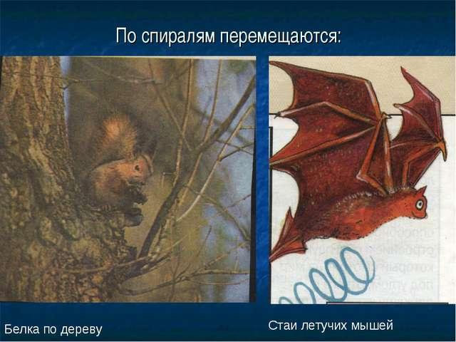 По спиралям перемещаются: Белка по дереву Стаи летучих мышей