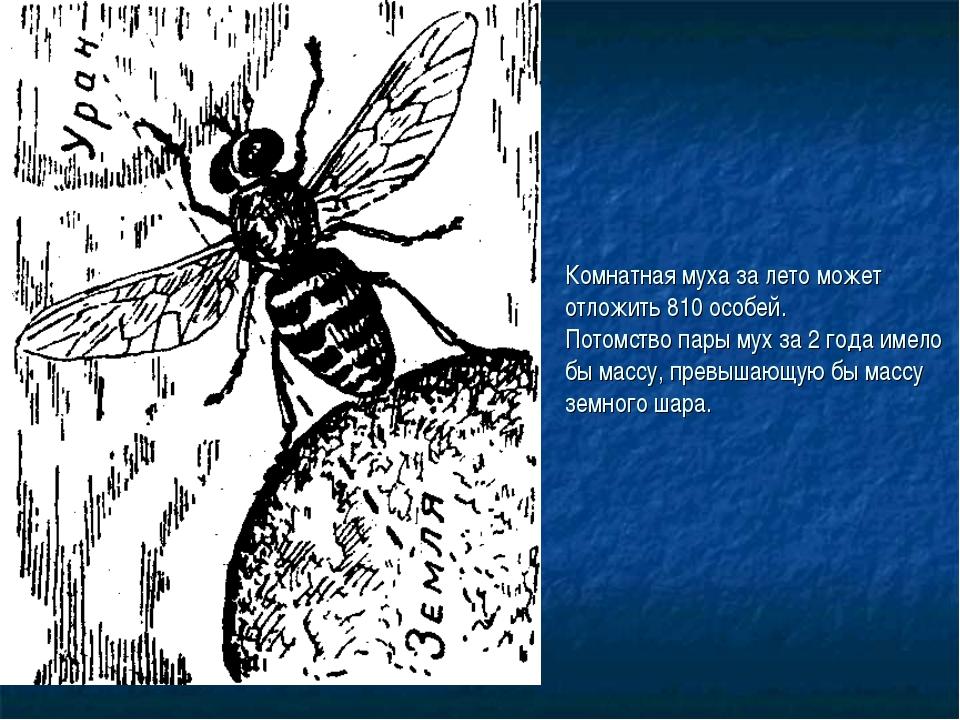 Комнатная муха за лето может отложить 810 особей. Потомство пары мух за 2 год...