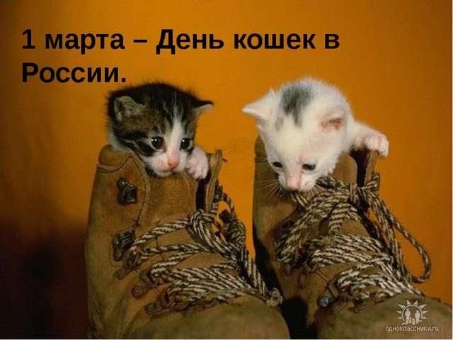 1 марта – День кошек в России.
