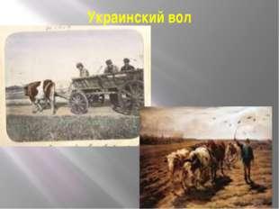 Украинский вол