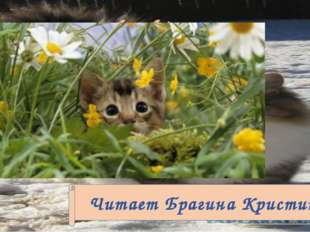 K. Nesbitt My cat Читает Брагина Кристина