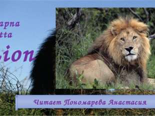 Swapna Dutta Lion Читает Пономарева Анастасия