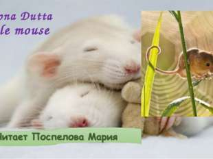 Swapna Dutta Little mouse