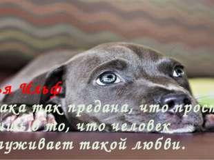 Илья Ильф Собака так предана, что просто не веришь в то, что человек заслужив