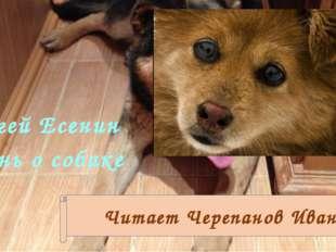 Сергей Есенин Песнь о собаке Читает Черепанов Иван