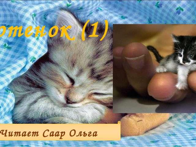 Котенок (1) Читает Саар Ольга