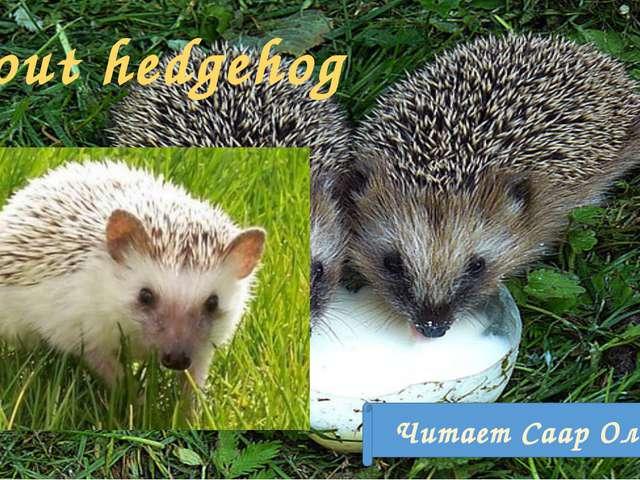 About hedgehog Читает Саар Ольга