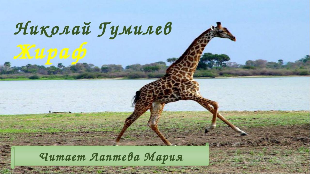 Николай Гумилев Жираф Читает Лаптева Мария