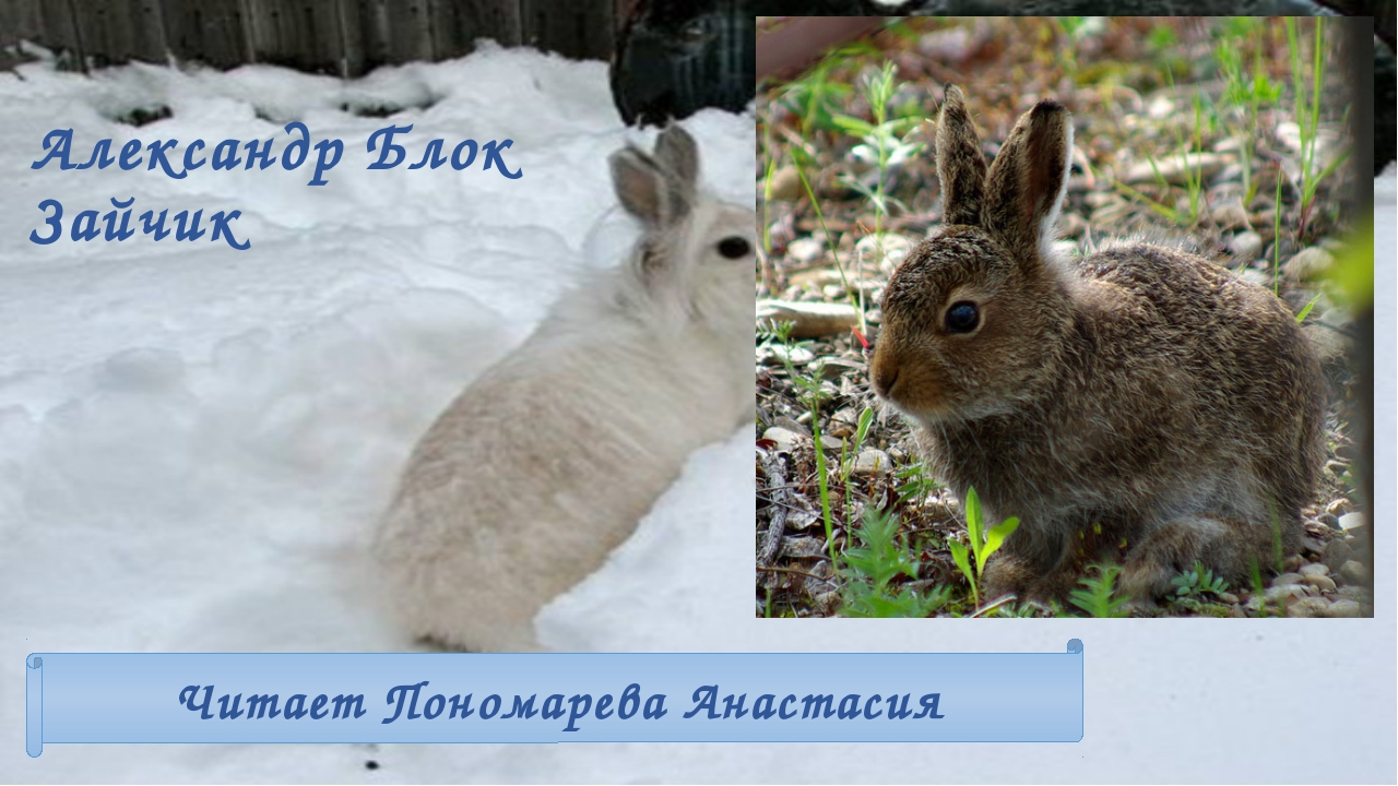 Александр Блок Зайчик Читает Пономарева Анастасия