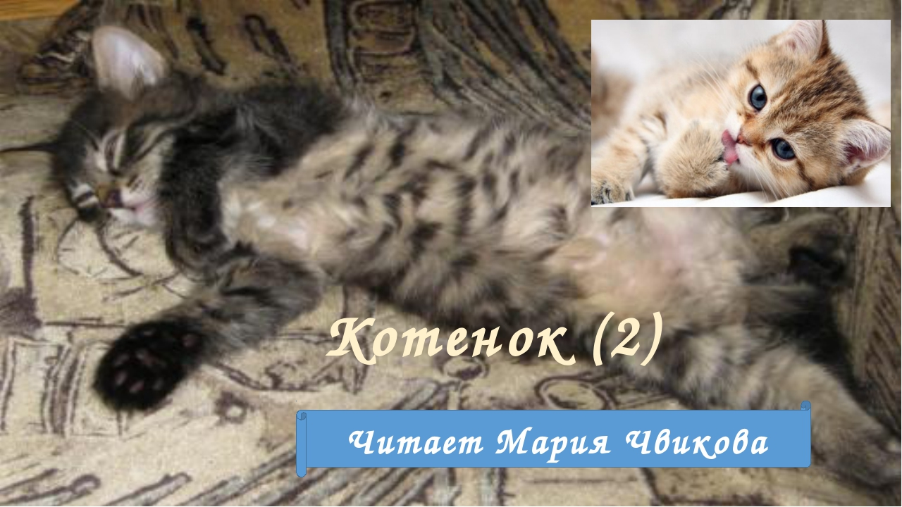 Котенок (2) Читает Мария Чвикова