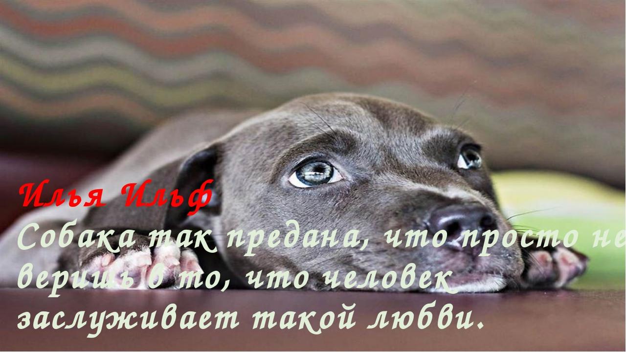 Илья Ильф Собака так предана, что просто не веришь в то, что человек заслужив...
