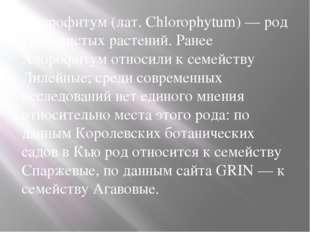 Хлорофитум (лат. Chlorophytum) — род травянистых растений. Ранее Хлорофитум о