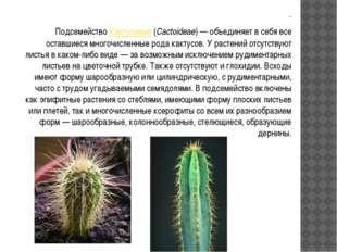 . . ПодсемействоКактусовые(Cactoideae)— объединяет в себя все оставшиеся м