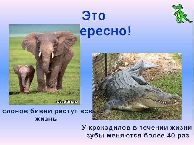 Это интересно! У слонов бивни растут всю жизнь У крокодилов в течении жизни з...