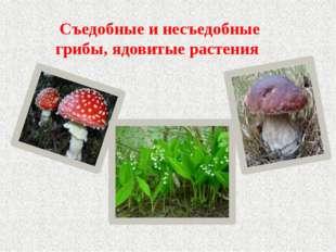Съедобные и несъедобные грибы, ядовитые растения
