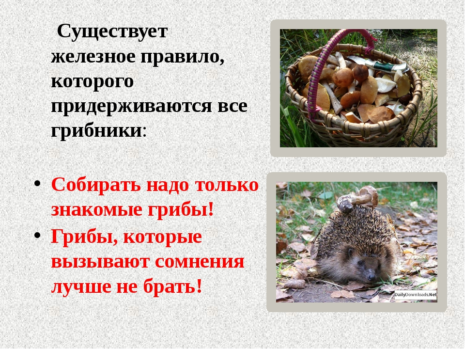 Существует железное правило, которого придерживаются все грибники: Собирать...