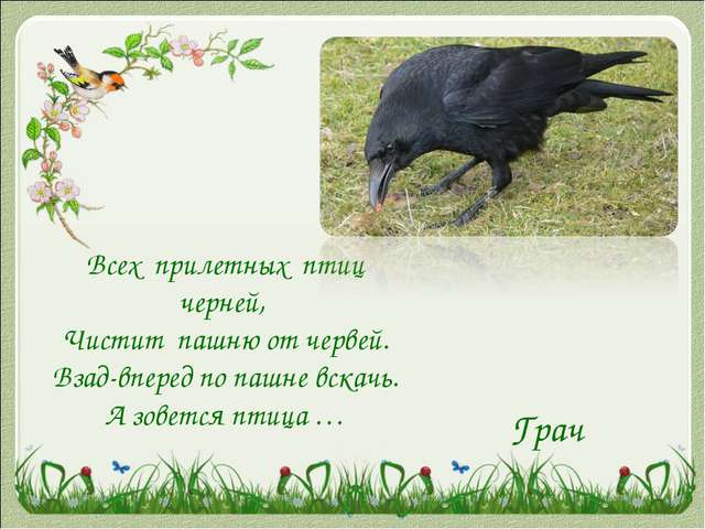 Всех прилетных птиц черней, Чистит пашню от червей. Взад-вперед по пашне вск...