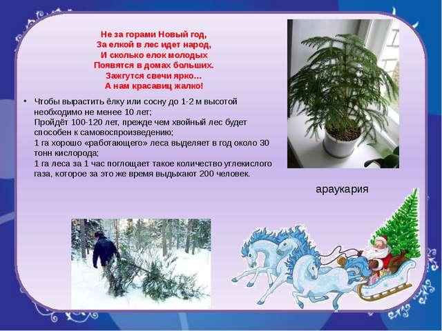 Не за горами Новый год, За елкой в лес идет народ, И сколько елок молодых По...